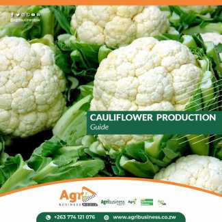 Cauliflower Production Guide