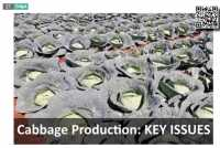 Cabbage Production: KEY ISSUES