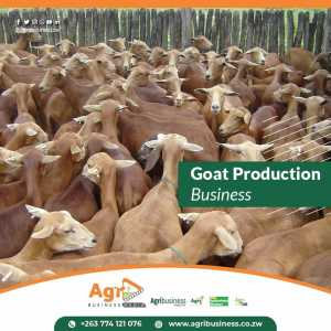 Goat production business tips