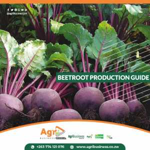 Beetroot Production Guide